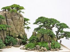 A close-up of a part of a penjing style planting from the World Bonsai Friendship Federation Convention that took place in China last month Bonsai Forest, Bonsai Garden, Garden Plants, Bonsai Trees, Small Japanese Garden, Plantas Bonsai, Belle Plante, Aquascaping, Miniature Trees