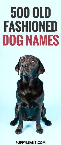 500 Old Fashioned Dog Names Dog Names Boy Dog Names Big Dog Names