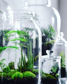 Artificial Flora: How to Make an Eternal Terrarium - Tehno Bazar Terrarium Cactus, Terrariums Diy, Moss Garden, Garden Plants, Back Gardens, Small Gardens, Indoor Garden, Indoor Plants, Mini Mundo