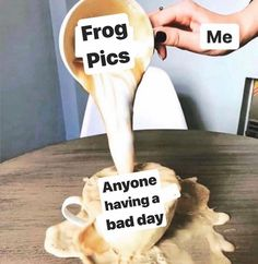 Frog Pictures, Cute Frogs, Frog And Toad, Oui Oui, Wholesome Memes, Funny Relatable Memes, Haha Funny, Cute Animals, How Are You Feeling