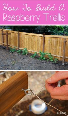 Building a traditional raspberry trellis is a great project and can be completed for less than $50!