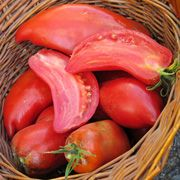 Tomatoes - Organic - Jersey Devil Tomato Organic