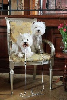 West Highland white terriers by katharine