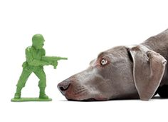 Army Dude Chew Toy. $20.