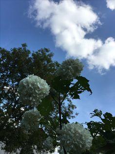 Clouds, Outdoor, Outdoors, Outdoor Living, Garden, Cloud