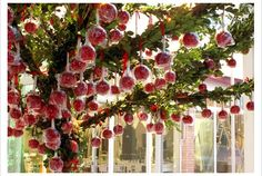 candied apples hung in a tree, make a beautiful outdoor party decoration. interesting idea for pops of red Candy Apple Favors, Apple Wedding Favors, Candy Party Favors, Wedding Candy, Wedding Party Favors, Candy Apples, Diy Wedding, Wedding Ideas, Fall Wedding