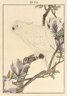 IMAO Keinen(今尾 景年 Japanese, 1845-1924)