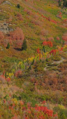 autumn, Alpine Loop, Uinta National Forest, Utah