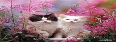 Kittens Facebook Cover