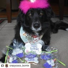 Category: Dog Birthday Treats | Page 3 | Pampered Paw Gifts Birthday Dog Treats, Birthday Cake Gift, Dog Birthday, Dog Toy Storage, Toy Storage Boxes, Gift Certificates, Dog Toys, Special Day, Make It Yourself