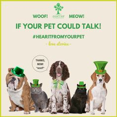 Come join me in the fun & you could win a $100 pawTree gift card!!   Let's hear it from your pet!! If your pet could talk, what would she tell you about how she feels on the inside? Does she feel good and healthy because of what you're feeding her? If so, share it with us and you could win a $100 pawTree gift card!  Here's how to play!  - Record a video of your dog or cat telling us how he feels on the inside because of the healthy food and/or supplements you give him using an app such as…