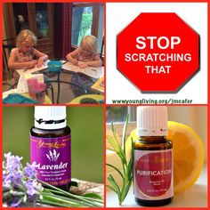 Summer bug bites cause miserable itching and skin infections... Lavender and Purification Stops the itch & cleans up the infection