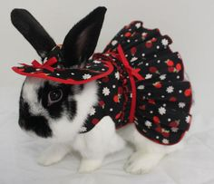 Strawberries and cream matching harness mini dress and hat for your bunny . Made to order by turvytopsy on Etsy