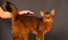 Petful - helping Pet live Happier Li ves