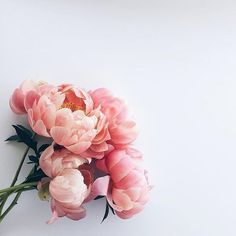 Here's a gentle reminder for you: Every flower has to grow through dirt. : @therefinedwoman