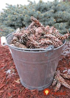 Pine cones collected outdoors can bring mold, mildew or bugs into your home unless they are correctly prepared for indoor use. Learn how to prepare pine cones for crafts. No bleach. All-natural. Pine Cone Art, Pine Cone Crafts, Pine Cones, Christmas Wreaths, Christmas Crafts, Christmas Decorations, Christmas Décor, Christmas Arrangements, Primitive Christmas