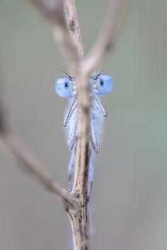 I see you! by sarahbuhr.deviantart.com on @DeviantArt