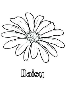 How to Draw Daisy Flower Coloring Page Classroom Ideas