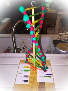 Universal genetic code this diagram shows a dna molecule which has dna 3d project for high school my son used popsicle sticks 1 dollar at the 99 store wire brush and play dough ccuart Images