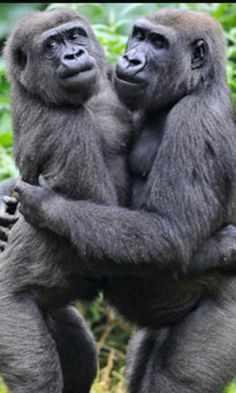 Google+ Iron Lion Zion, Planet Of The Apes, Primates, Wild Things, Mans Best Friend, Monkeys, Animals Beautiful, Animals And Pets, Awesome
