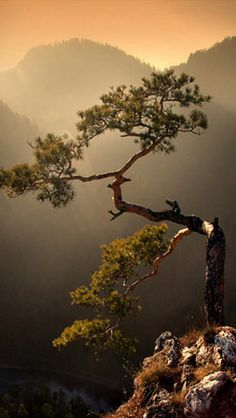 Rugged Tree