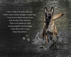 Need a gift for a coffee lover✩ Stop searching and get inspired now! White Swiss Shepherd, Belgian Shepherd, German Shepherd Dogs, German Shepherds, Black Belgian Malinois, German Malinois, Belgium Malinois, Dog Commands, War Dogs
