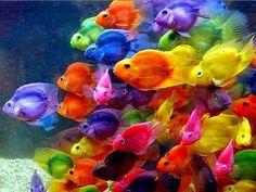 Beautiful colorful fish