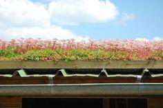 Quelques exemples de toits végétalisés parisiens