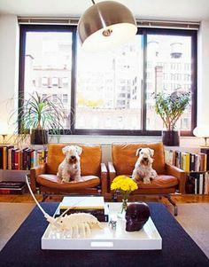 Dos elementos decorativos más :P   #mascotas #perros