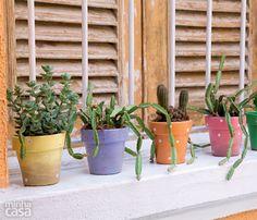 04-suculentas-plantas-faceis-de-cuidar