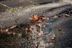 effetto pioggia - dopo che ha piovuto ed esce un po' di sole è un momento magico per fotografare...