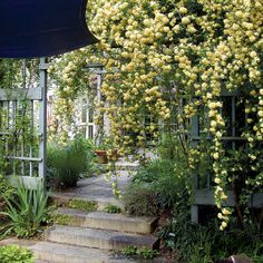This small space overflows with plants that drape, spill onto walkways, and perfume the air. Plantings such as yellow banksian rose (Rosa banksiae 'Lutea', Zones 8–9) imbue the garden with an air of romance and heighten the feeling that this garden is a personal refuge separate from the city that surrounds it.