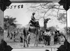 https://flic.kr/p/71SVLM | Man on camel | Man (unidentified expedition member) on camel. 1927.  Name of Expedition: Daily News Abyssinian Expedition Participants: Wilfred Osgood, Louis Agassiz Fuertes, C. Suydam Cutting, Jack Baum, Alfred M. Bailey Expedition Start Date:  September 7, 1926 Expedition End Date: May 20, 1927 Purpose or Aims: Zoology Mammals and Birds Location: Africa, Ethiopia [Abyssinia]   Original material: 4x5 inch interpositive film Digital Identifier: CSZ55988  Learn more…