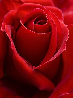 ♡❤ #Red ❤♡ ♥ ❥