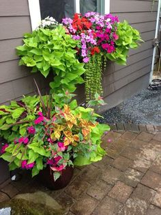 My window box full of sweet potato vine, impatiens and coleus.