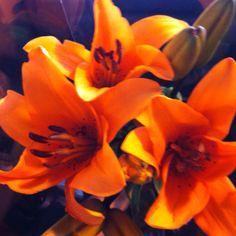 orange lillies <3 my favourite flowers
