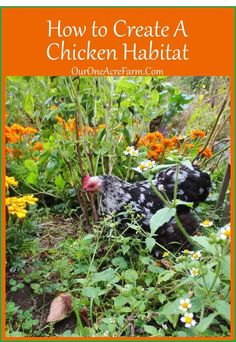 How to Create a Chicken Habitat - based on info about the habits and habitat of the chicken's wild relatives, the jungle fowl. Also tips on how to make the most of a small space. For Jon's Stupid CHICKENs Chicken Garden, Chicken Feed, Chicken Runs, Diy Chicken Coop, Wild Chicken, Small Chicken, Baked Chicken, Keeping Chickens, Raising Chickens