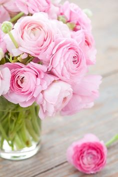 When selecting a bouquet of ranunculus select a striking color or a mixed bouquet. Ranunculus Flowers, Shabby Flowers, May Flowers, Flower Backgrounds, Flower Wallpaper, Bouquet Box, Spring Pictures, Spring Photography, Floral