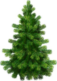 Transparent Pine Tree PNG Clipart