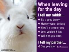 When leaving for the day I tell my rabbit...