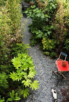 back garden — Magali & Bart's Soulful Belgium Retreat | Apartment Therapy