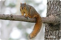 hibernation: pretend to be a squirrel stashing nuts for the winter Hibernating Animals, Animals That Hibernate, Animals Information, Big Backyard, Winter Ideas, Squirrels, Peanuts, Fun Activities, Appreciation