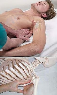 Мышцы в проекции на тело | 179 фотографий