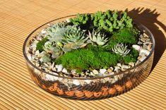 Picture of plant terrarium basics.