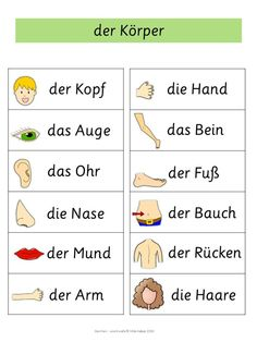 Do you know the names of all major parts of the body? Here's a little help: #german #languagelearning #vocabulary