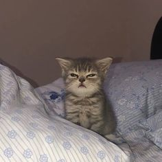Cute Baby Cats, Cute Little Animals, Cute Funny Animals, Kittens Cutest, Cats And Kittens, Funny Cats, Cute Kitty, Funny Cat Photos, Funny Animal Pictures