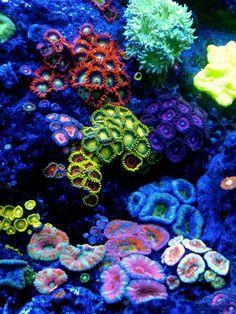 Flores de todos colores del océano