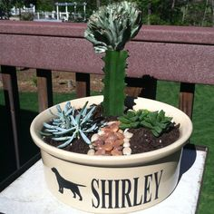 Food dish planting as a memorial for our dog who passed away.