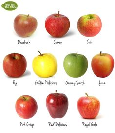 Kinds Of Apple's Fruit | Fruit ForThe Office: 10 Types of Apple