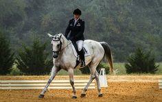 Jak poprawić ruch konia? - część I, czyli stęp
